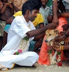 Свадьба Селвакумара с собакой. Фото из архива (c)AP