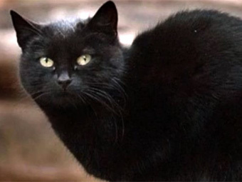 Кот Томмазино. Кадр видеозаписи с сайта YouTube