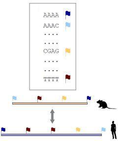 Иллюстрация алгоритма работы хешмеппинга.(Нажмите, чтобы увеличить)