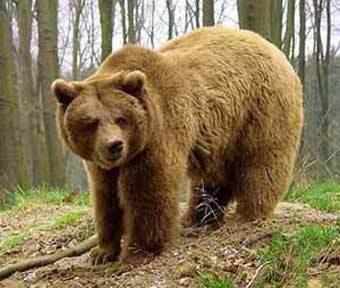 http://img.lenta.ru/news/2005/07/04/bears/picture.jpg