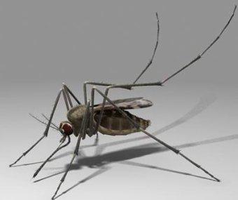 Скорость полета комара составляет 3,2 км/ч.
