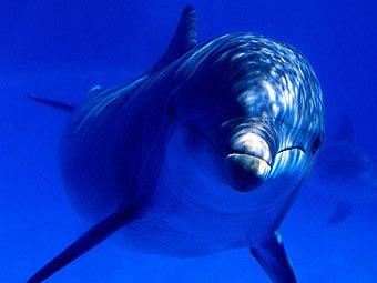 Информация о массовой гибели дельфинов у побережья Анапы не подтвердилась.