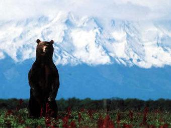 ...Жупаново медведь-людоед напал на пенсионера, передает в пятницу...