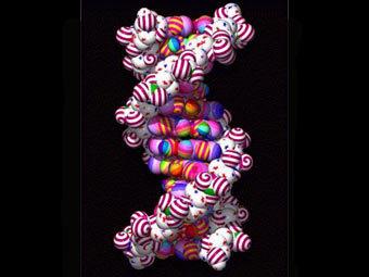 Модель спирали ДНК. Изображение с сайта lecb.ncifcrf.gov