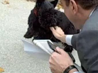 Скотч-терьер Буша укусил журналиста за палец