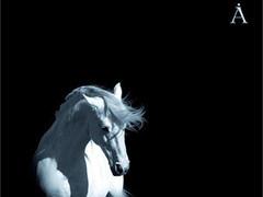 """Фрагмент обложки альбома """"Белая лошадь"""" группы """"Аквариум"""""""