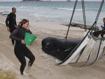 Спасение китов (26 фото)