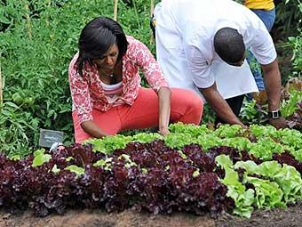 декоративный огород Мишель Обамы