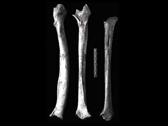 Люди начали употреблять в пищу пресноводную рыбу как минимум 40 тысяч лет назад