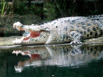 """...устно удовлетворить крокодила """" - вот такой эрогуглоперевод."""