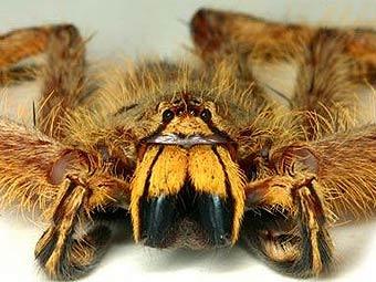 Такой выбор был обусловлен надеждой биолога привлечь внимание общественности к проблеме защиты редких видов пауков.