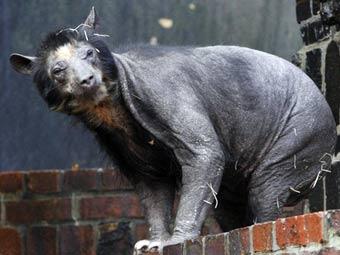 http://img.lenta.ru/news/2009/11/04/bears/picture.jpg