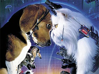 """Постер к фильму """"Кошки против собак"""""""