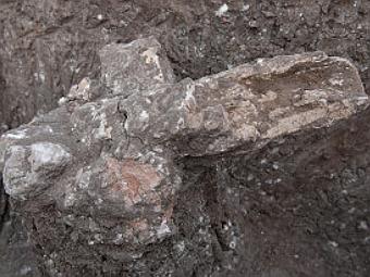 фрагмент животных останков, найденных в древнем доме. Фото Israel Antiquities Authority