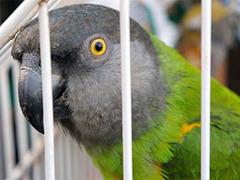 Шотландец угодил в тюрьму за нападение на попугая
