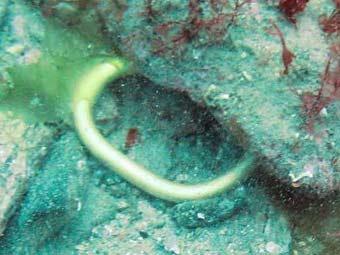 Предмет, обнаруженный в районе кораблекрушения. Фото с сайта The Daily Telegraph