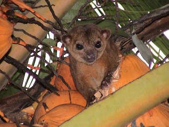 Млекопитающие, обитающие на деревьях