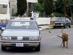 Британца оштрафовали за дистанционный выгул собаки