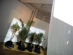 Нью-йоркский художник создал фильм для растений