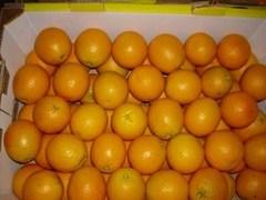 Сомалийские пираты захватили судно с апельсинами