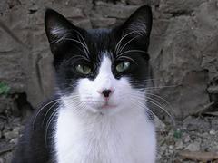 Британских почтальонов запугал престарелый кот