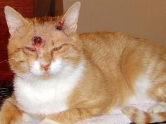 Кошка по кличке Китти выжила, получив девять