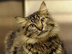 Пропавший кот нашелся в двух тысячах километров от дома