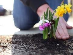 Житель Лондона засадил выбоины на дорогах цветами