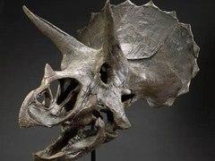 В Нью-Йорке выставили на продажу кости динозавров