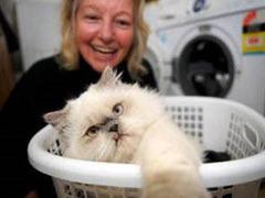 Котенок пережил полчаса стирки в машине