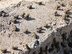 Лягушки заблокировали греческое шоссе