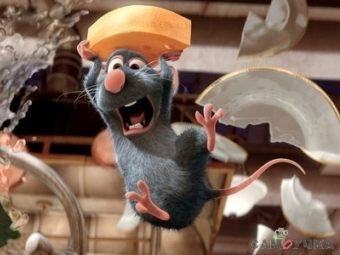 Волынщик помог австрийской турфирме в борьбе с крысами