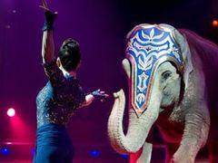 В центре Цюриха час ловили сбежавшего слона