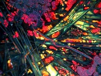 Обнаруженные в Беловоде фрагменты медной руды. Фото с сайта sciencenews.org