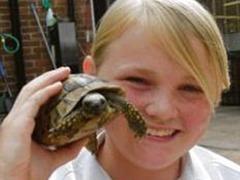Сбежавшая от хозяев черепаха нашлась через два года в двух километрах от дома