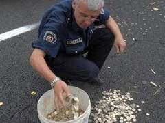 На итальянском шоссе перевернулся грузовик с деньгами