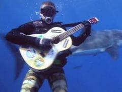 Эколог спел песню большой белой акуле