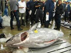 На рыбном аукционе в Токио продали гигантского тунца