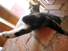 В Великобритании открыли фешенебельный отель для кошек
