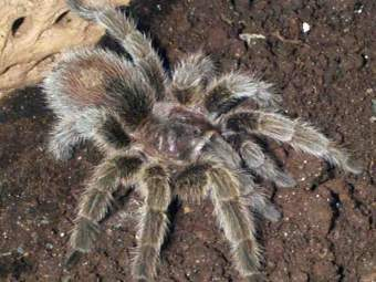 Американца приговорили к тюремному заключению за кражу паука из библиотеки