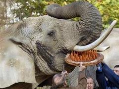 В зоопарке Базеля умер старейший африканский слон