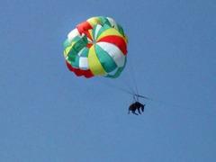 """""""Летающую"""" ослицу отправят на отдых в кремлевскую конюшню"""