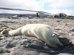 Путешественник проснулся в медвежьей пасти