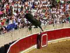 В Испании вырвавшийся с арены бык ранил 30 человек