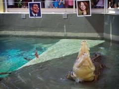 Вещий крокодил предсказал результаты выборов в Австралии