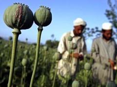В Афганистане изъята крупнейшая в истории партия наркотиков