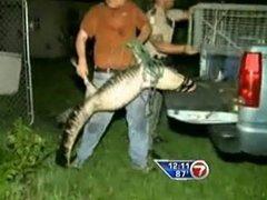 Однорукий житель Флориды спас аллигатора
