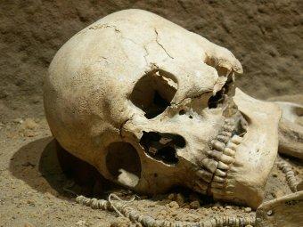 Туристы попытались вывезти из Греции черепа в качестве сувениров