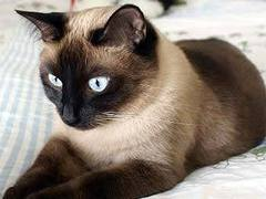 Кошка стала виновницей падения двух украинцев с балконов