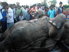 В Индии поезд сбил семь слонов